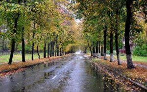 بارش باران در گیلان/ دمای هوا کاهش می یابد